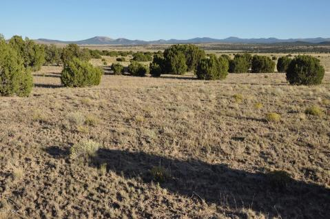 Homes For Sale In Concho Valley AZ Real