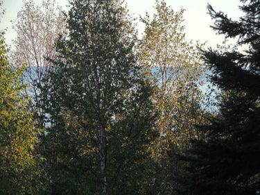 LND located at 1X Mountain Ash Ln