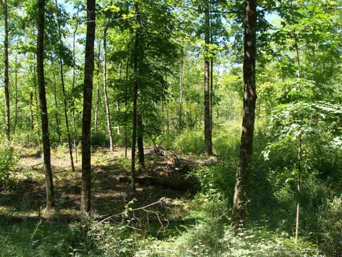Lot 8-1 N. Pepperell Road
