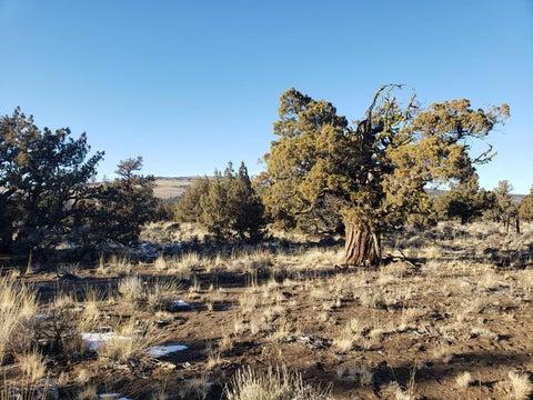 3700 Golden View Ranch