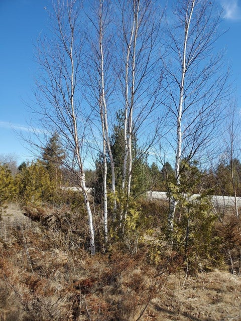 Lot 11c Timberline Rd