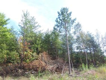 LND located at Lot 9 Black Brook Rd